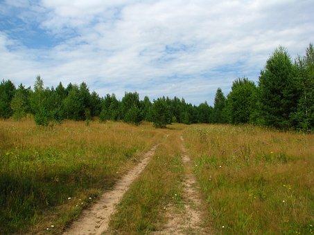 Summer, Forest, Glade, Blue Sky, Sun, Nature, Grass