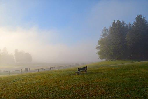 Field, Mist, Morning, Park Bench, Grass, Trees, Nature