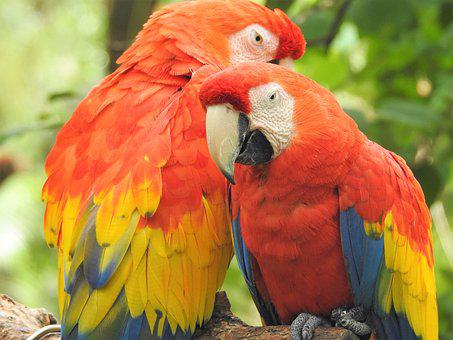 Parrot, Bird, Wildlife, Colorful, Wing, Jungle, Nature