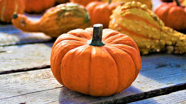 Orange, Ornamental Pumpkins, The Cultivation Of
