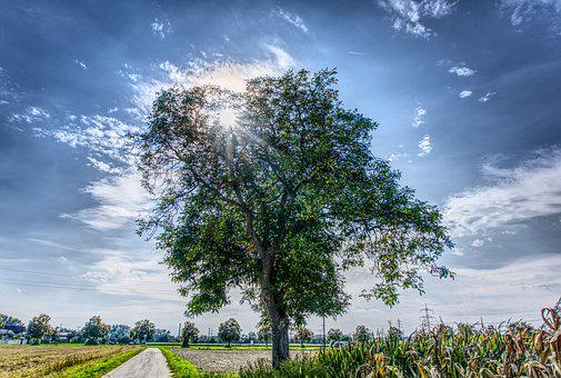 Tree, Sky, Blue, Sunbeam, Back Light, Cycle Path, Away