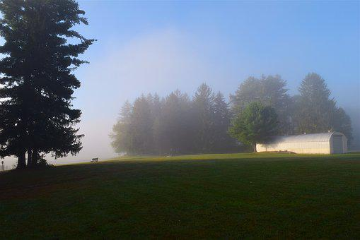 Field, Mist, Morning, Grass, Trees, Nature, Landscape