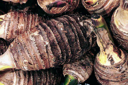 Taro Root, Tuber, Caladium, Root, Tropical, Plant