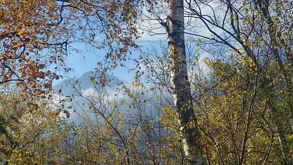 Twigs, Delicate, Birch, Autumn, Morning, Haze, Thin