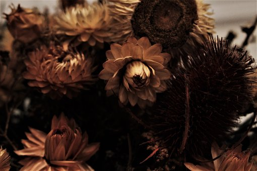Dried Flowers, Past, Nostalgia, Withered Flowers