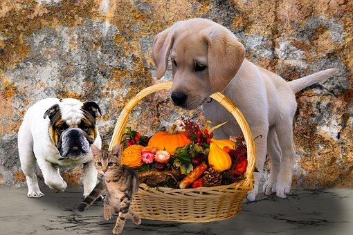 Animals, Dogs, Cat, Autumn, Harvest, Thanksgiving