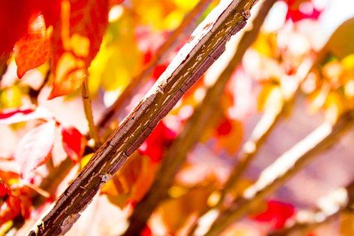 Fall, Leaves, Autumn, Fall Leaves, Season, Orange
