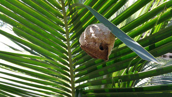 Bee Hive, Nest, Bee, Palm, Tropical, Leaf, Flora