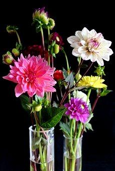 Dahlias, Flowers, Vase, Dahlia Garden, Blossom, Bloom