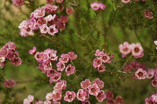 Wild Flowers, Bush, Botanical, Blossom, Blooming