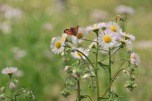 Butterfly, Bee, Flowers
