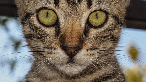 Eyes, Cat, Cat Eyes, Close Up