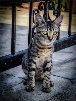 Cat, Stray, Animal, Eyes, Looking, Cute, Young, Kitty