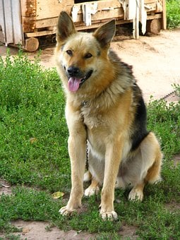 Dog, Security, Animals, View, Dogs, Each, Pets