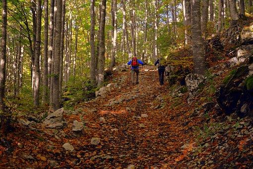 Excursion, Forest, Autumn, Trail, Trekking