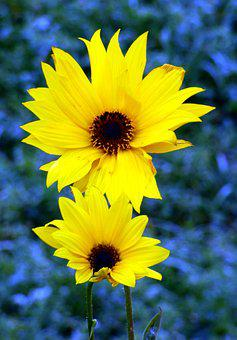 Flowers, Yellow, Wild, Nature, Petals, Country