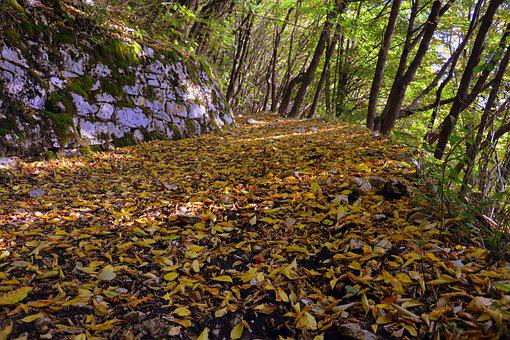 Excursion, Forest, Autumn, Trail, Mountain