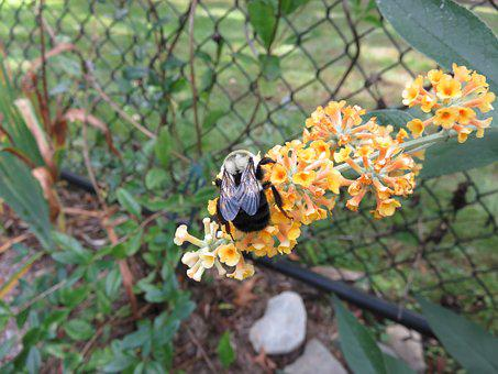 Bee, Flower, Yellow, Insect, Garden, Green, Plant