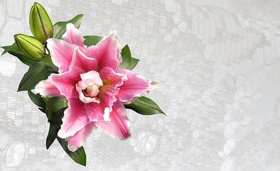 Greeting Card, Lily, Pink