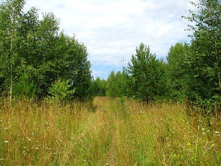 Summer, Forest, Blue Sky, Sun, Nature, Grass, Fringe