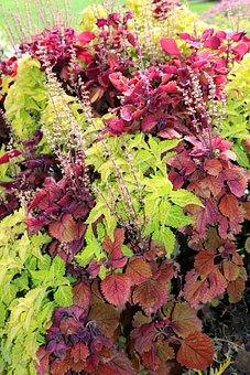 Red, Leaves, Leaf, Green, Nature, Floral, Plant