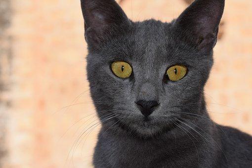 Cat, Eyes, Looking, Face, Portrait, Animal, Look