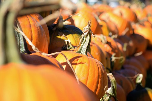 Pumpkin, Harvest, Pumpkin Patch, Autumn, Season, Orange
