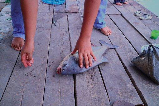 Ikan Bawal, Fishing, Fish, Seafood, Silver, Contrast