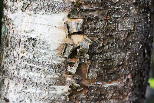Texture, Tree, Wood, Nature, Timber, Pattern, Surface