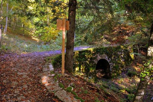 Bridge, Excursion, Forest, Autumn, Trail, Mountain