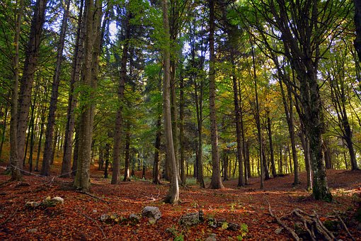 Forest, Trees, Autumn, Leaves, Trail, Mountain