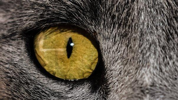 Eye, Cat, Close Up, Feline, Animal, Watching