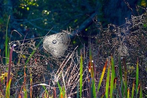 Spiderweb, Grass, Spider, Web, Nature, Insect, Dew