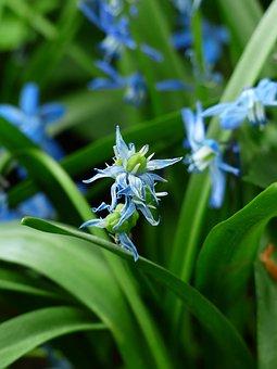 Bluebell, Flower, Blossom, Bloom, Blue, Fruits