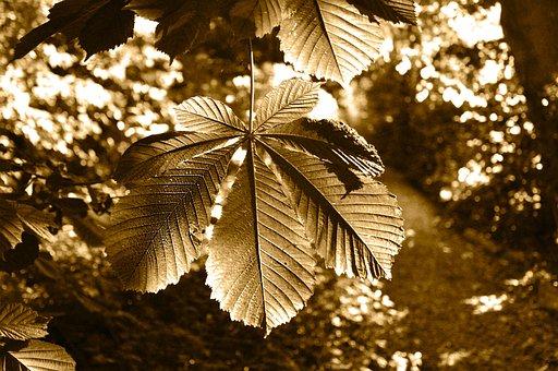 Tree, Chestnut Tree, Branch, Leaf, Chestnut Leaf