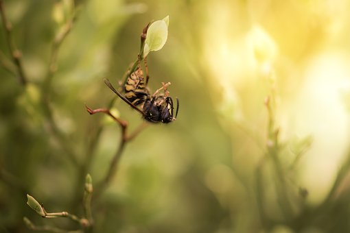 Bee, The Insect, Wasp, Yellow, Macro, Summer, Flower