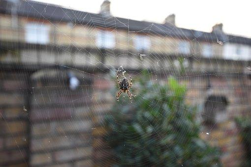 Spiders View, Web, Garden Spider, Blurred Background