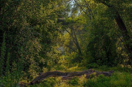 Landscape, Balance Beam, Forest, Trees Morning