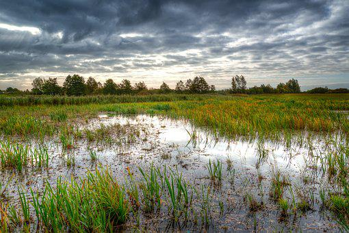 Swamp, Morning, Water, Reflection, Nature, Meadows