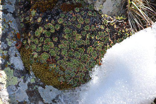 Kennedy, Stone, Texture, Composition, Macro, Nature