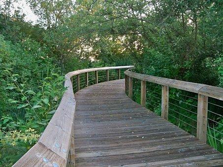 Park, Boardwalk, Nature, Trail, Trees