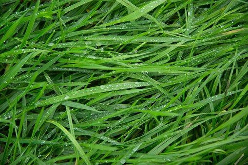 Green, Grass, Wet, Drops, Rain, Water, Texture