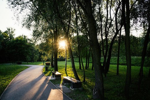 Park, Rays Of The Sun, Tree, Alley, The Sun, Sunset
