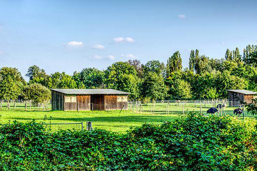 Ostrich, Ostrich Farm, Nature, Barn, Stall, Green