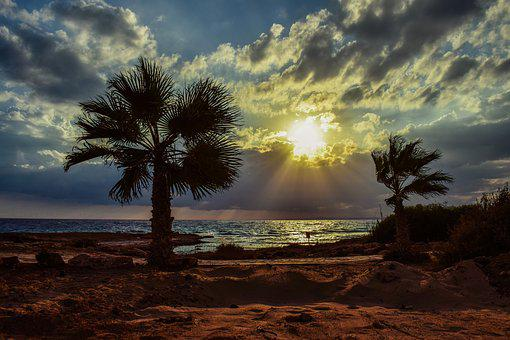 Sunset, Palm Trees, Sky, Clouds, Sea, Sunlight, Sunbeam