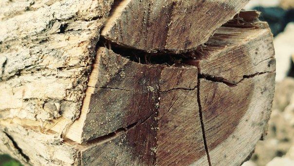 Log, Cracked, Bark, Sawn, Timber, Lumber, Textures