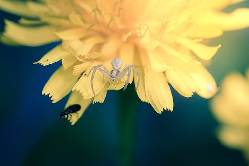 Flower, Flowers, The Nature Of The, Macro, Spider
