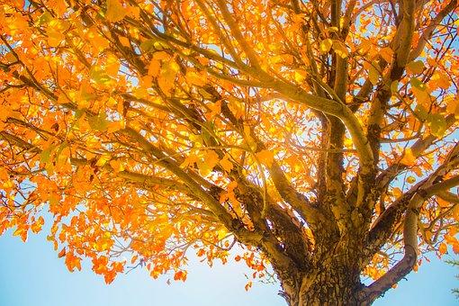 Fall, Tree, Sky, Autumn, Nature, Landscape, Foliage