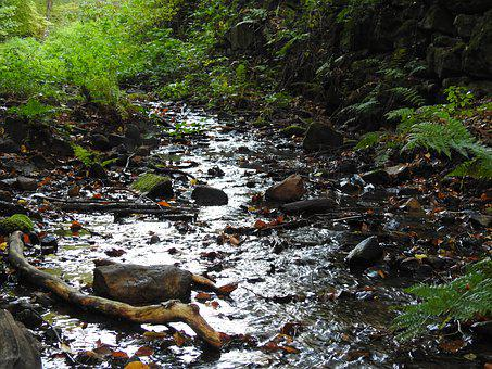 Forest, Bach, Water, Water Running, Waters