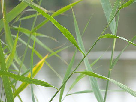 Grass, Grassy, Blade, Straws, Green, Water, Natural